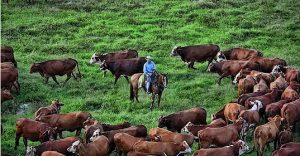 The_Adams_Family_Ranch