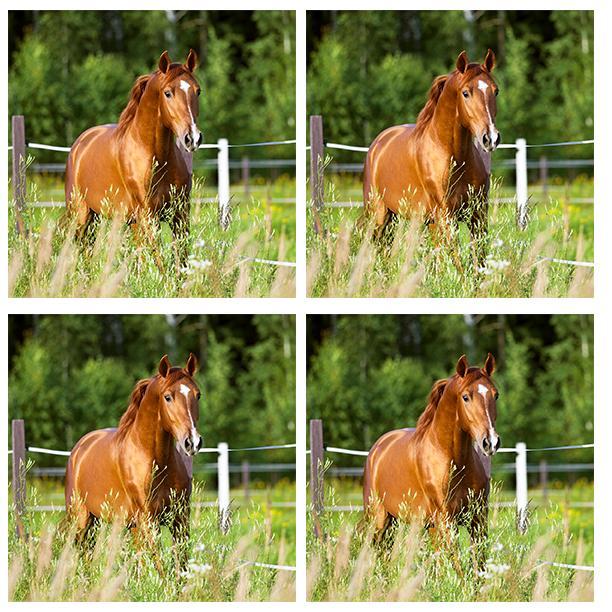 Horses 400